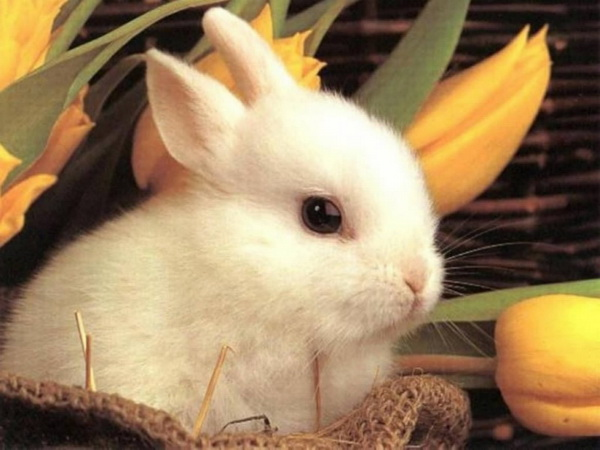 easter wallpapers. White Easter Bunny